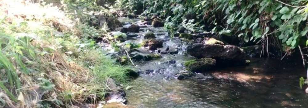 pringle-creek-1